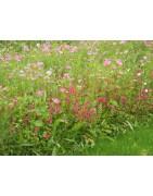 mélanges fleuris monochromes